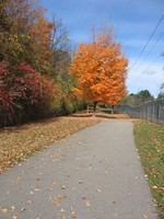 (Thumbnail) Fall Colours :  Millennium Trail Facing North Between Lundy's Lane and McLeod Road (image/jpeg)