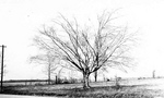 (Thumbnail) Beechtree - Thorold Stone Road (image/jpeg)