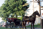 (Thumbnail) Horse and Carriage in the Old St. John's Church Parade (image/jpeg)