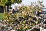 (Thumbnail) Aftermath of Fort Erie Snowstorm, October 12, 2006 - tree broken off on Niagara Parkway (image/jpeg)