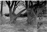 (Thumbnail) January 1982 ice and snow in Queen Victoria Park / Niagara Falls in Winter (image/jpeg)