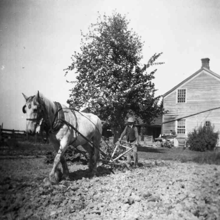 Farmer working his garden with a horse drawn plough (image/jpeg)