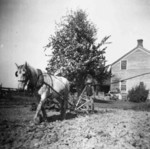 (Thumbnail) Farmer working his garden with a horse drawn plough (image/jpeg)
