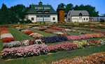 (Thumbnail) The All-America Flower Trials at Stokes Seed Farms, St Catharines, Ontario (image/jpeg)