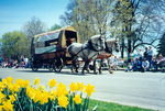 (Thumbnail) Niagara Falls Blossom Festival Parade in Queen Victoria Park - grey horses pulling an old fashioned covered wagon (image/jpeg)