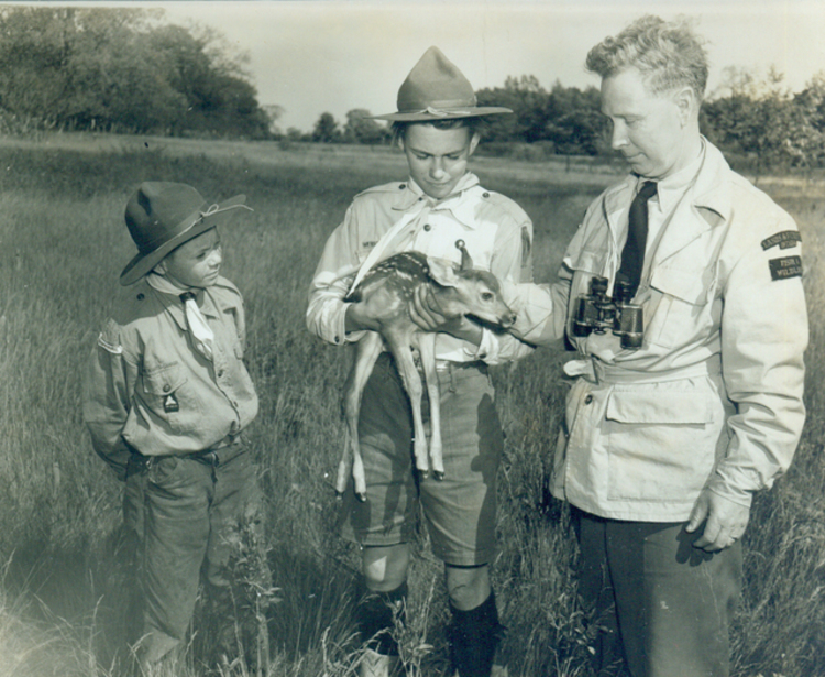 Conservation Officer A Roy Muma of the Ontario Department of Lands and Forests & Fish & Wildlife Niagara area showing a young deer to boy scouts (image/jpeg)
