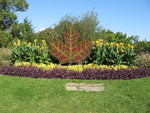 (Thumbnail) Maple Leaf Floral Display at Niagara Parks Floral greenhouse (image/jpeg)