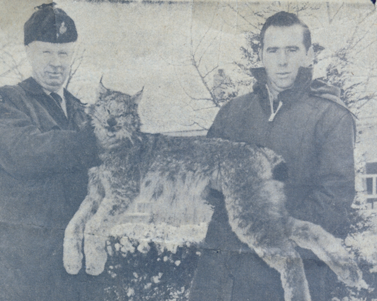 Conservation Officer A Roy Muma of the Ontario Department of Lands and Forests & Fish & Wildlife Niagara area and Reg Pineo with the first lynx known to have been shot in Niagara (image/jpeg)