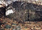 (Thumbnail) Boulder in the Niagara Glen (image/jpeg)