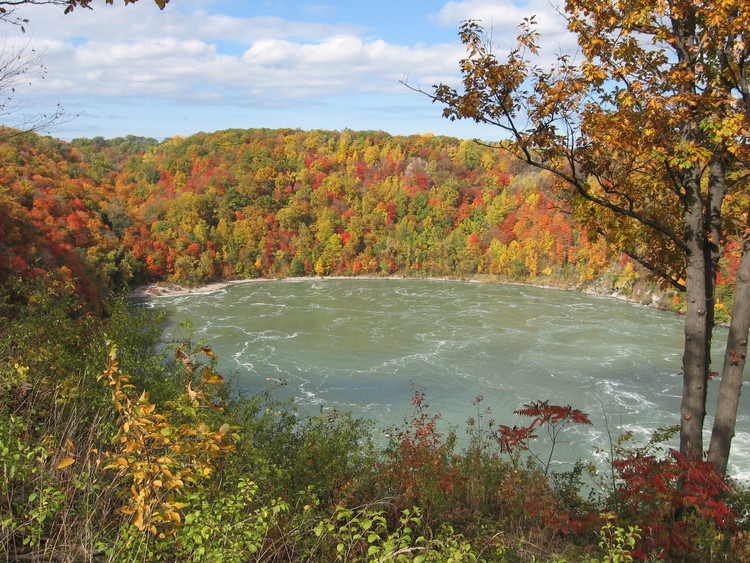 Fall Colours at the Whirlpool (image/jpeg)