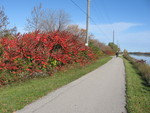(Thumbnail) Fall Colours : The Welland Canal Trail Between Locks Two and Three Looking North at Red Sumac Bushes and Two Cyclists (image/jpeg)