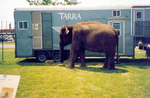 (Thumbnail) Tarra the elephant relaxing at Optimist Park after marching in Canada Day Celebrations at Niagara Falls (image/jpeg)