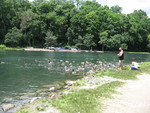 (Thumbnail) Ducks and Canada geese at Dufferin Islands (image/jpeg)