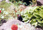 (Thumbnail) Squirrel in a rock garden at Niagara Parks Commission Greenhouse (image/jpeg)