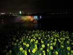 (Thumbnail) Daffodils at the Brink of the Niagara Gorge With Illuminated American Falls in the Background (image/jpeg)