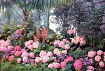 (Thumbnail) Spring flowers at the Niagara Parks Commission Greenhouse (image/jpeg)