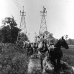 (Thumbnail) A team of horses being used to pull line cables for the Ontario Power Company (image/jpeg)
