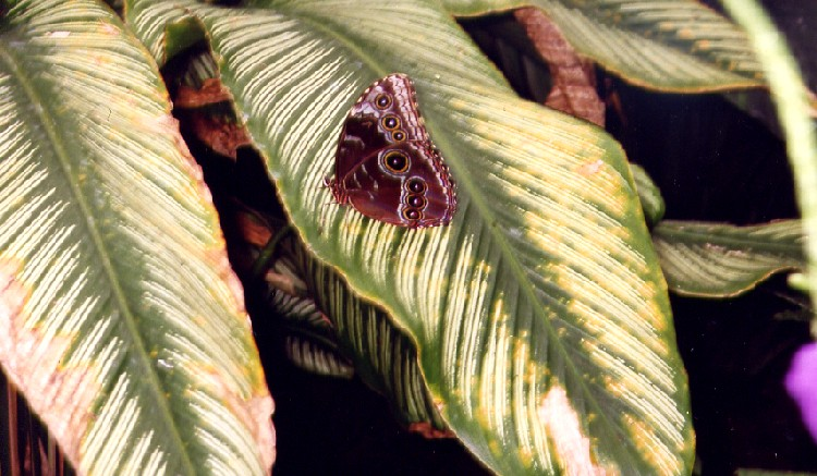 Niagara Parks Commission Butterfly Conservatory - close-up of butterfly on leaf (image/jpeg)