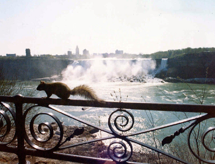 Canadian squirrel looking at the American Falls (image/jpeg)