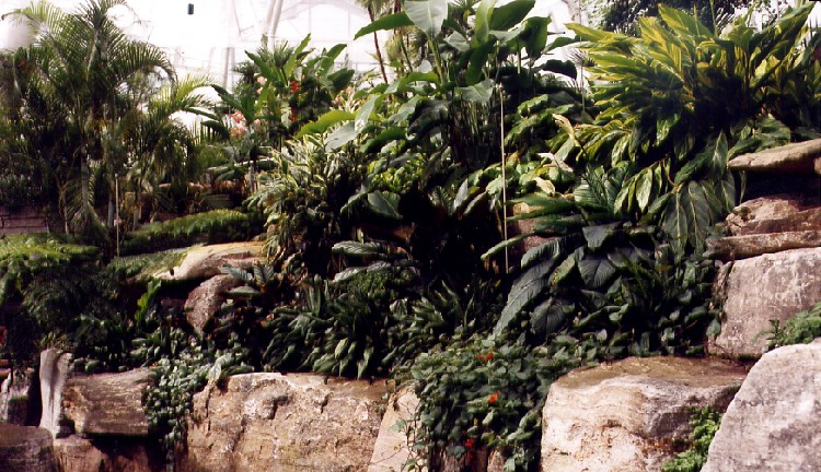 Niagara Parks Commission Butterfly Conservatory - interior view (image/jpeg)