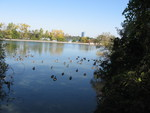 (Thumbnail) Fall Colours and Canada Geese at the Gathering Weir (image/jpeg)