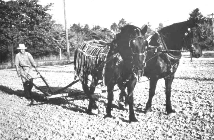 Farmer using horses to plow his field (image/jpeg)