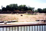 (Thumbnail) Brown bear enclosure at Marineland (image/jpeg)