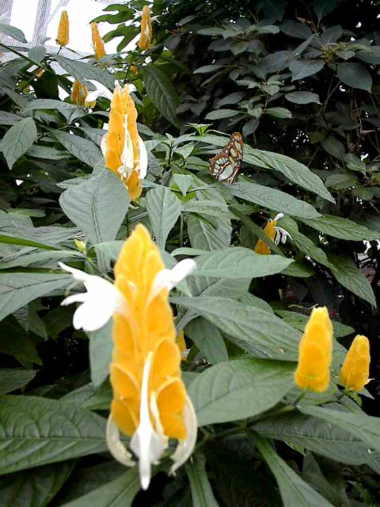 Butterflies on flowers at the Niagara Parks Commission Butterfly Conservatory (image/jpeg)