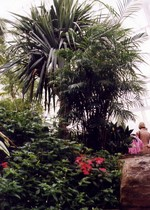 (Thumbnail) Niagara Parks Commission Butterfly Conservatory - interior view (image/jpeg)