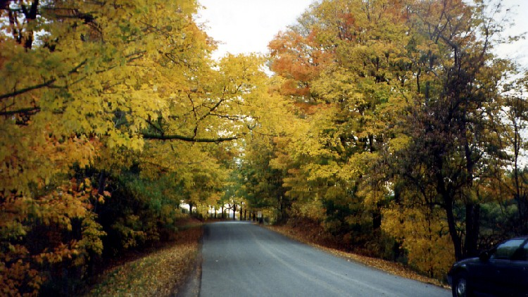 Holland Rd near St John's - Thorold Ontario - Fall colour and leaves (image/jpeg)