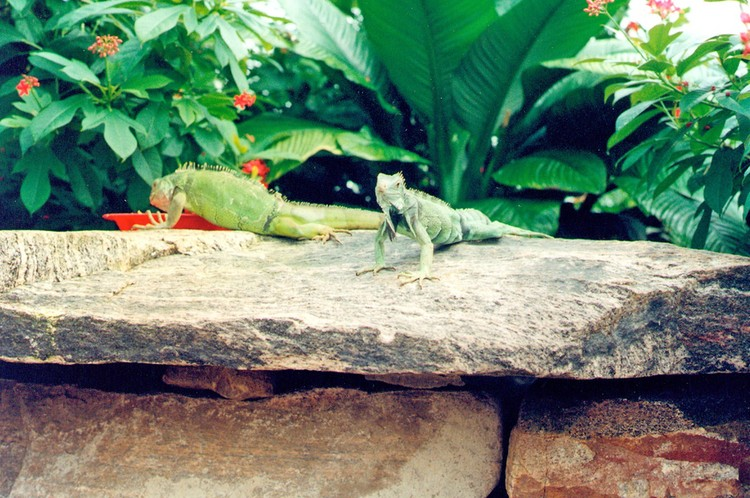 Niagara Parks Commission Butterfly Conservatory - interior view - lounging lizards (image/jpeg)
