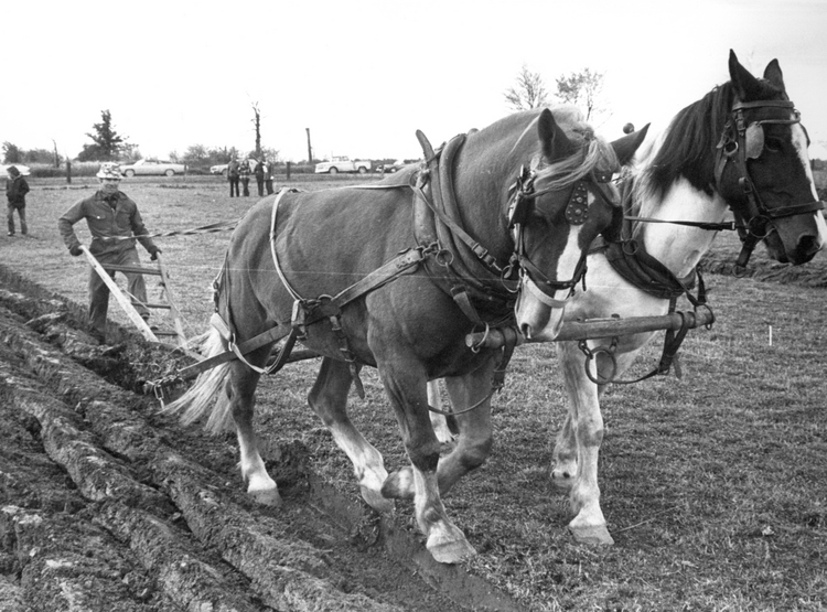 Farmer using horses to plow the fields (image/jpeg)