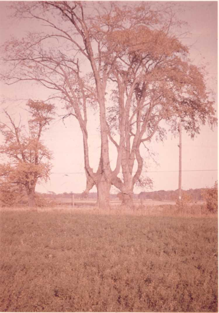 The Indian Trail - Marker Tree on Townline Rd. (image/jpeg)
