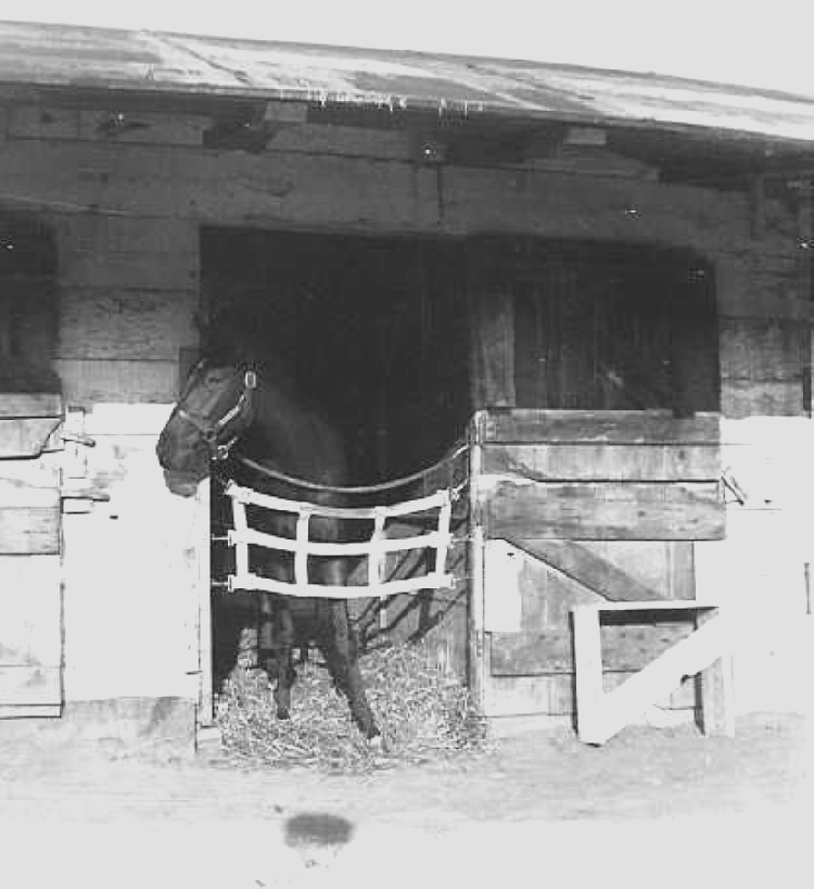 Florinda the Horse in the Stable at Stamford Park Racetrack (image/jpeg)