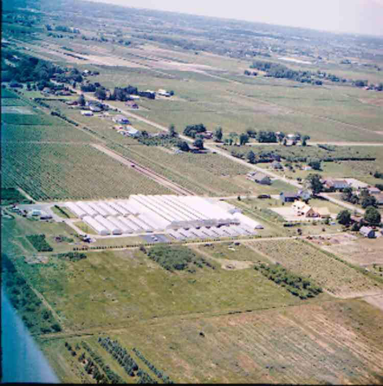 An aerial view of Dodd's Greenhouses, 1213 Progressive Ave., Niagara-On-The-Lake, Ont., / 2000 (image/jpeg)