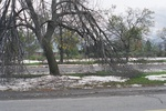(Thumbnail) Aftermath of Fort Erie Snowstorm, October 12, 2006 - Damage at north side of Old Fort Erie (image/jpeg)