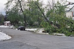 (Thumbnail) Aftermath of Fort Erie Snowstorm, October 12, 2006 - corner of Catherine  & Stanton St. - massive tree down (image/jpeg)